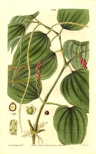 pepe stampa del 1832