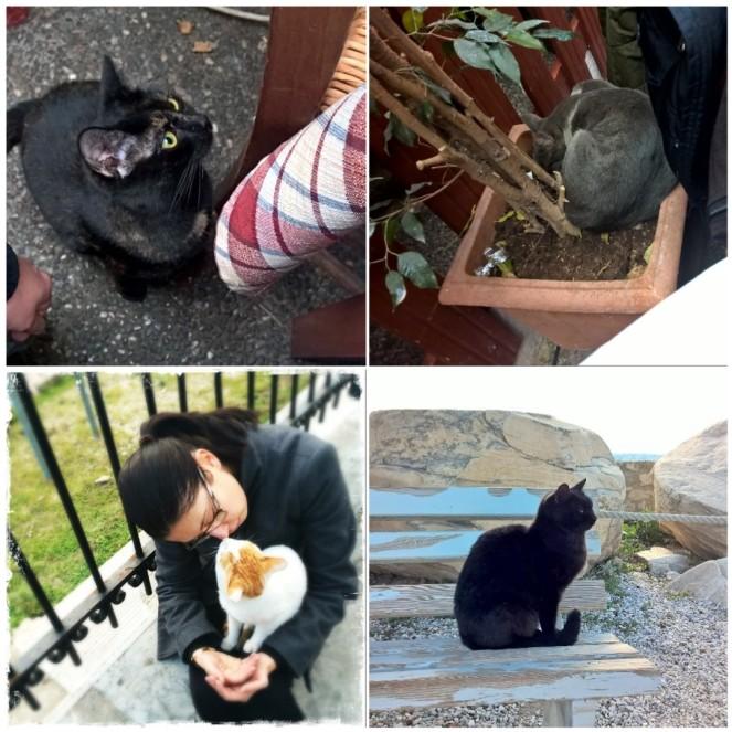 Gatti di Atene